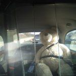 TaxiFun avait un passager bien sage: Teddy!