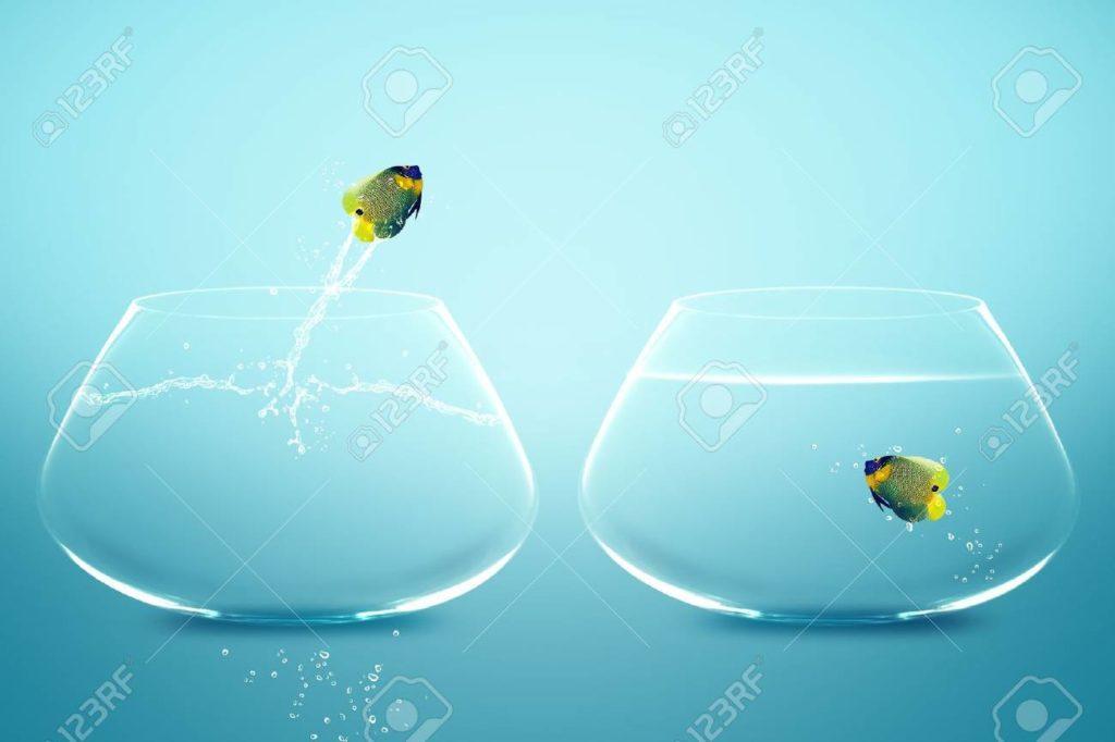 la vie beau mot taxifun poussin jaune mains tendresse beauté fragilité bonheur poissons retrouvailles inséparables