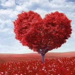 Le beau mot de TaxiFun Amour arbre en forme de coeur rougeTaxiFun Le beau mot de TaxiFun mariage et amour taxi anglais love wedding coeur liens du mariage mon amour